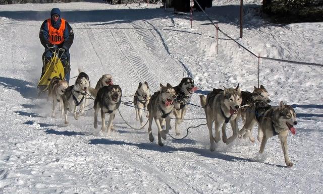 1200px-Frauenwald,_Hundeschlittenrennen,_6.jpg