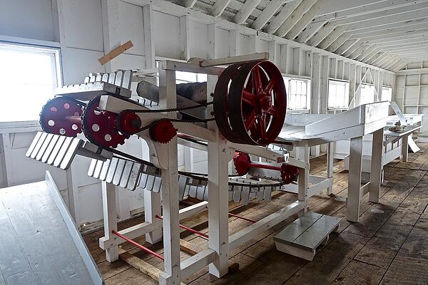 A-conveyer-belt-in-a-wooden-facility