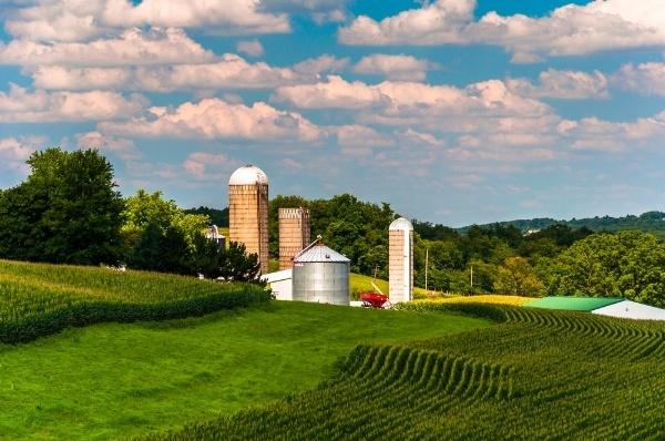 Corn fields and silos on a farm in Southern York County, Pennsylvania.-885306-edited.jpeg