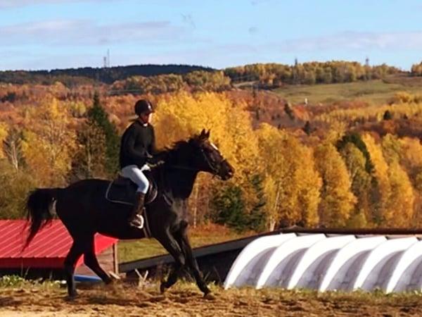 Gingras-Romy_horse
