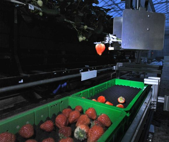 Japan_Robot_Farm.jpg
