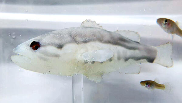 fish-robot-predator_770