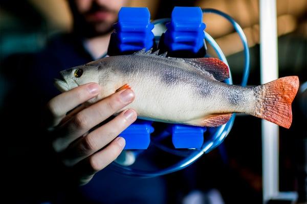 fishgrabber1400