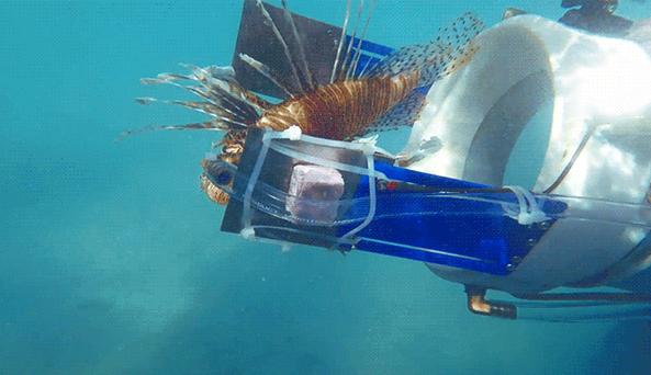 Lionfish zapper