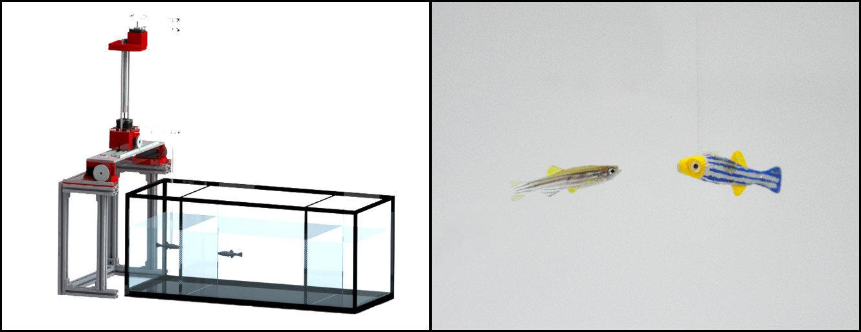 zebrafish.jpg